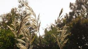 Flower grass, field sunlight and rim light stock footage
