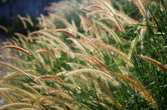Flower grass field royalty free stock photography