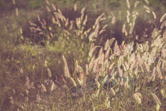 Flower grass filed with retro color tone Stock Images