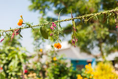 Flower and grass garlands for Tihar in Nepal Stock Image