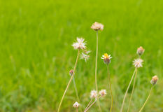 Flower grass Stock Photo