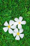 Flower and grass royalty free stock photos