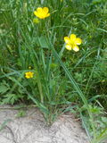 Flower. Grass, green, day, yellow Stock Images