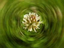 Flower in grass Royalty Free Stock Photos