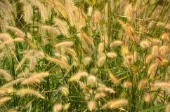 Flower grass impact sunlight Stock Image