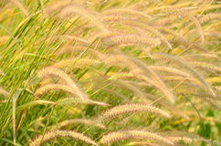 Flower grass impact sunlight Royalty Free Stock Photo