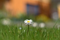 Flower, Grass, Meadow, Wildflower stock photos