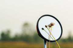 Flower grass  on a mirror Stock Photography