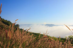 Flower grass and mist. Flower grass on the hill with the mist Royalty Free Stock Photography