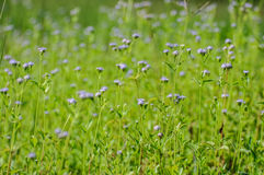 flower grass stock images