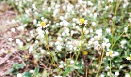 Flower grass Stock Photos