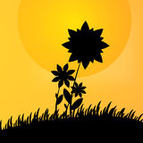 Flower and grass on orange-yellow background Royalty Free Stock Photography