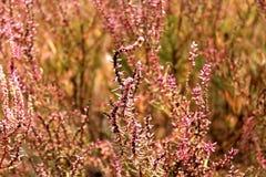 Flower. Grass plants landscapes tree Stock Image