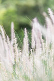 Flower grass at relax morning time Royalty Free Stock Photography