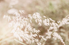 Flower grass at relax morning time :soft focus Stock Images