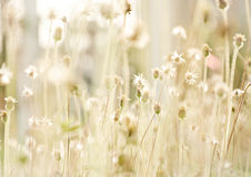 Flower grass at relax time Royalty Free Stock Photo
