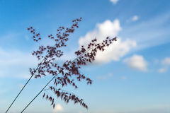 Flower grass and soft blue sky background Stock Photography