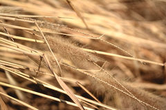 Flower grass with sunlight. Royalty Free Stock Photography