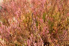 Flower. Grass view pink landscapes Stock Photo