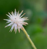 Flower of grass with water drops on blurred background.  Royalty Free Stock Image