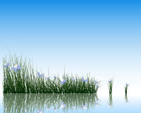 Flower with grass on water surface Stock Photography