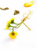 The flower grass on whit isolate background. Stock Photos