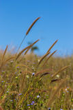 The flower grass on wind in field Stock Photography
