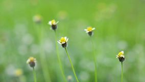 Flower grass yellow the wind blows by the wind. Nature shady in the green lawn stock video footage