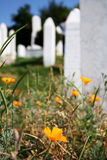 Flower on the grave. Orange flower growing on the islamic cemetery, in Sarajevo, Bosnia and Herzegovina. Vertical format, selective focus Stock Images