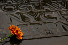 Flower on a grave. A single flower of tagetes placed on a wet grave Royalty Free Stock Photography