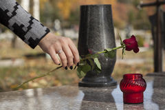 Flower on the grave. Woman's hand laying red rose on grave stock photos