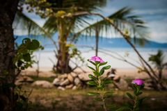 Flower with a great view over the sandy beach. Beautiful clouds. In the blue sky. Islands at the horizont. Some palms stock image