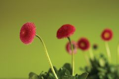 Flower on green background. Pink flower on a green background Royalty Free Stock Images