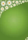 Flower on green background Stock Photos