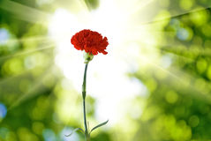 Flower on a green background Royalty Free Stock Photography