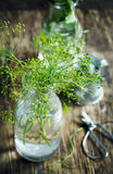 Flower of green dill. Fennel. Stock Images