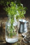 Flower of green dill. Fennel. Royalty Free Stock Photos
