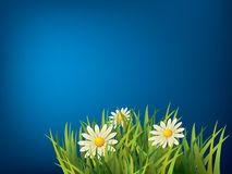 Flower in green grass Royalty Free Stock Photos