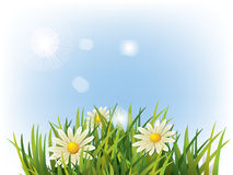 Flower in green grass Stock Images