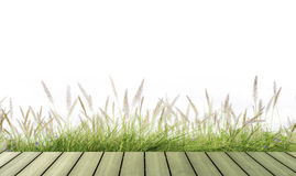 Flower green grass fresh spring isolated Stock Photos