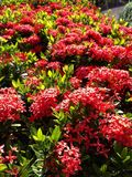 Flower green leaf tree red beautiful background. Flower green leaf tree red beautiful Stock Images