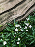 Flower and green leaf on wood Stock Images