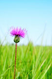 Flower and green meadow Royalty Free Stock Photos