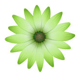 A flower with green petals Royalty Free Stock Images