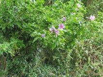Green nature. Flower Green sappy relaxing restful soothing refreshing background bottom wallpaper vegetation Stock Images