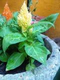 flower green yellow garden  plant stock image
