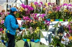 Flower greenhouse, floristic decor elements close-up. Keukenhof is the world's largest flower garden. KEUKENHOF GARDEN, NETHERLANDS - MARCH 24: Flower royalty free stock photography