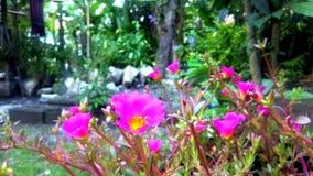 Greentrik garden stock photography