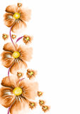 Flower greeting Royalty Free Stock Photos