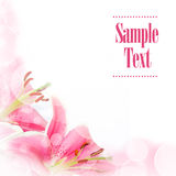 Flower greeting card. Lily flower greeting card with copyspace Stock Images